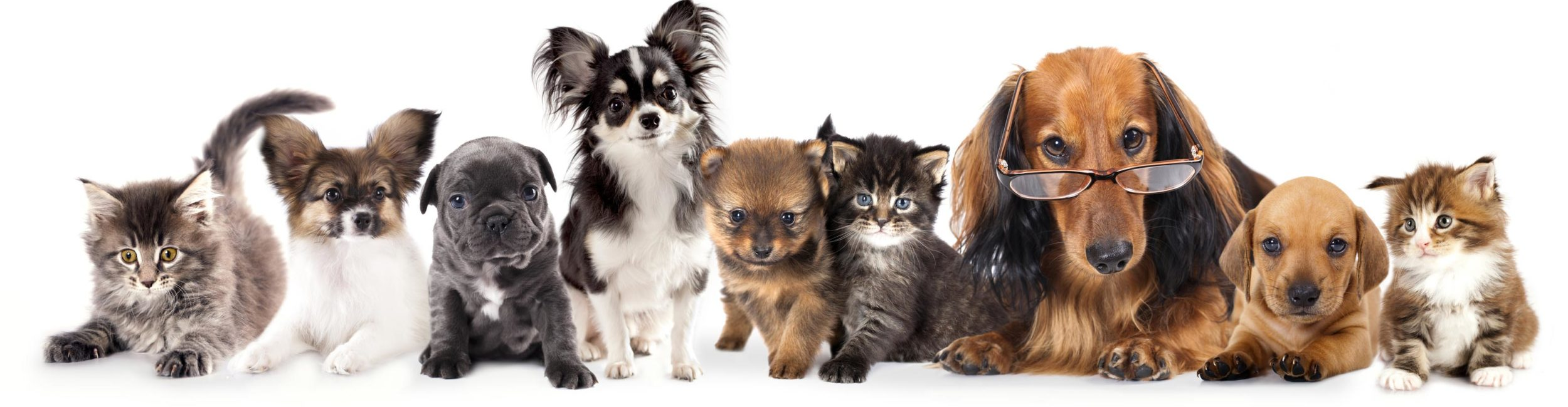 doggyscool-chiens-studieux-web