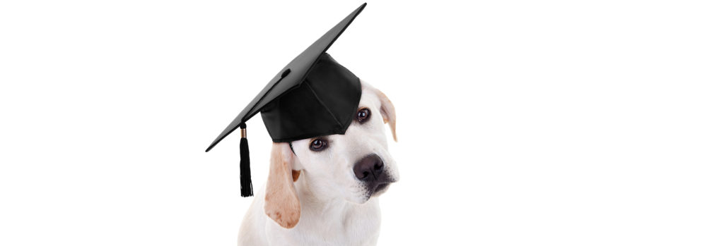 doggyscool éducation canine